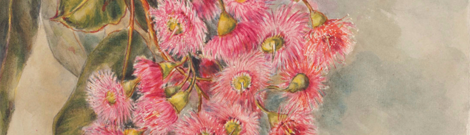 Gladys O'Grady: Flowers from the Collection